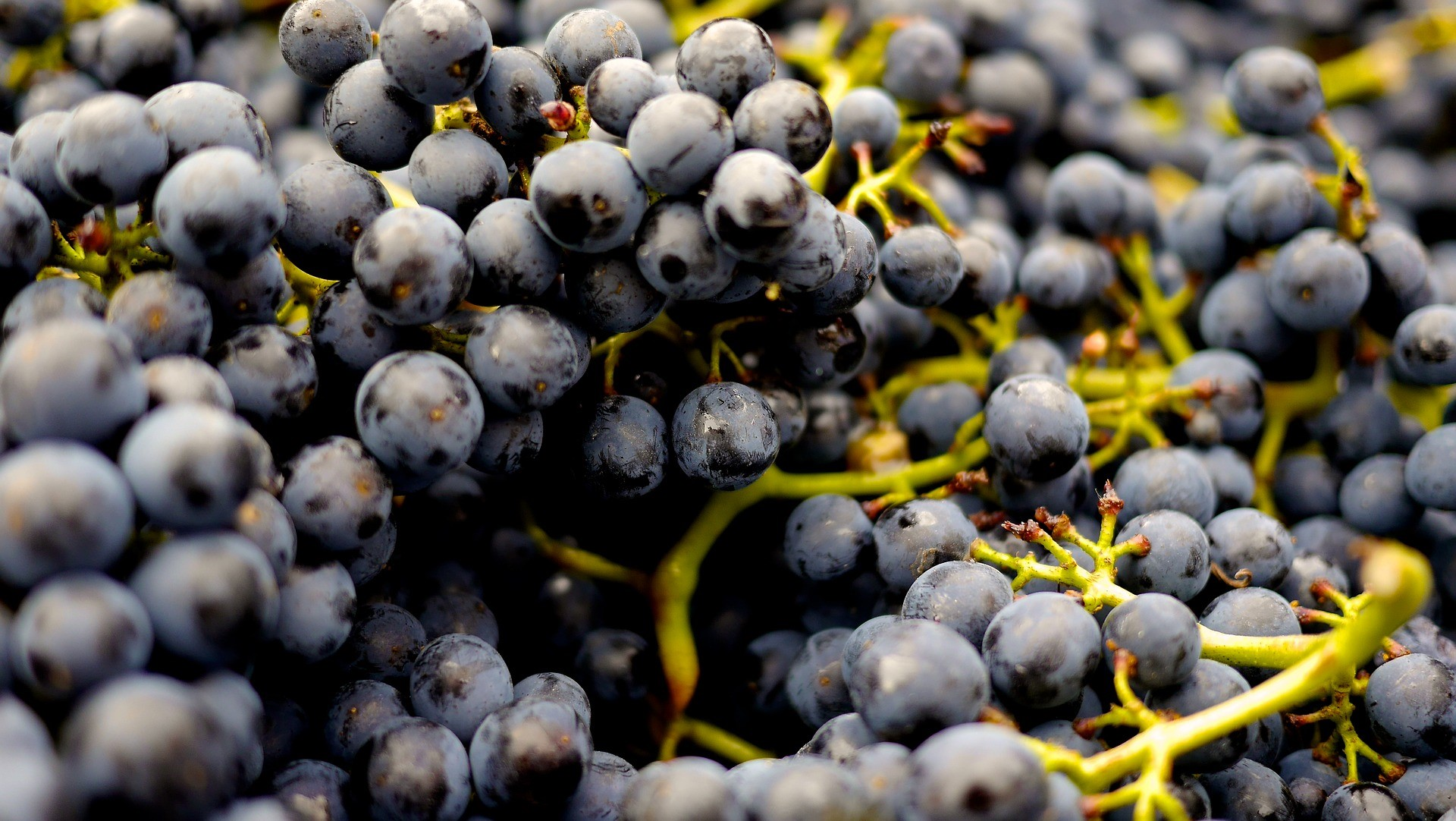 grapes-2104075_1920