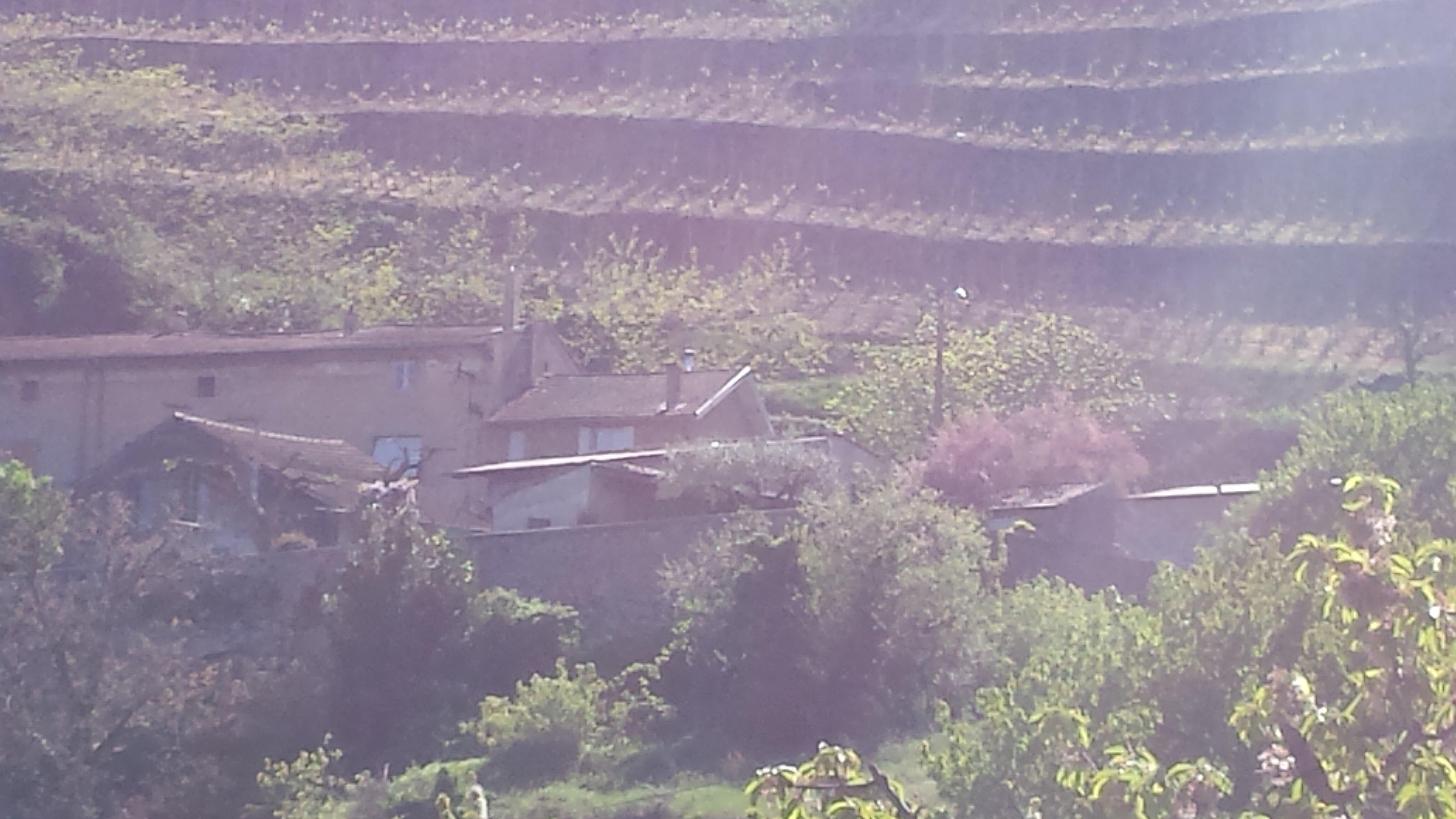 vinhuset guy farge